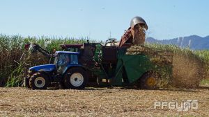 Harvesting Rows Of Sugarcane by pfgun0