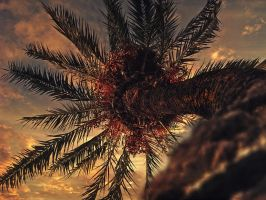 Palm Tree To The Sky by Khanorr