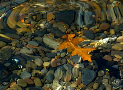 Leaf, on the Finger Lakes by DirtHat