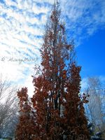 Frosty Morning Tree by Michies-Photographyy