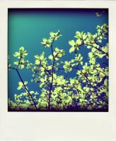i am glad its spring by x--photographygirl