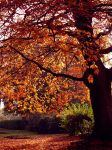 red autumn by palominodweezil