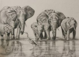 Elephants by Helenr251