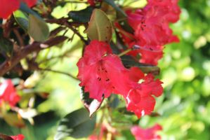 LC's Photographs - Summer Flower by Lunaticharmed