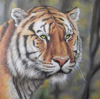 Tiger Portrait Painting by JonMckenzie