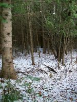 First Snow in Woods I by Jenna-RoseStock