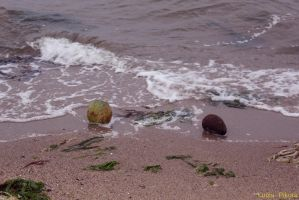 Fruits on the beach by LouiseCypher