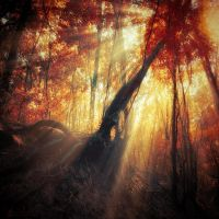 gravity of light by ildiko-neer