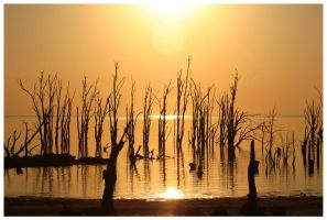 Drowned Trees 01 by michref