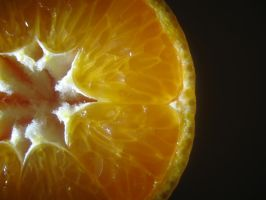a bit of citrus by SpencerCameron