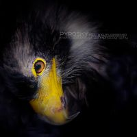 Eagle eye by Piroshki-Photography