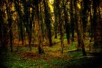 Woods of the Wild by Parmiter