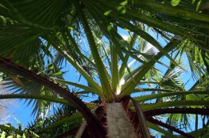 Thorny Palm by PaddleGallery