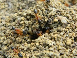 Ant Nest 004 - HB593200 by hb593200