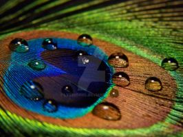 Peacock Feather by Lysendriel