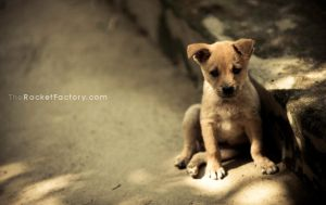 Nikon D3x - Puppy love by frankrizzo