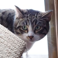Matty's Place Cat Sanctuary - III by AgilePhotography