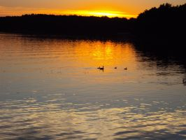 Sunset with Ducks by stevenvog9
