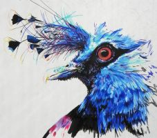 W.I.P- Victorian Crowned Pigeon by kDdabous