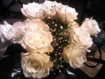 White Roses by AnimalPlantLearner