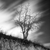 to be deeply rooted by MustafaDedeogLu