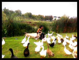 The girl and the ducks II by Zoehi