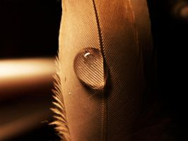 .don't.cry.birdy. by witchlady750