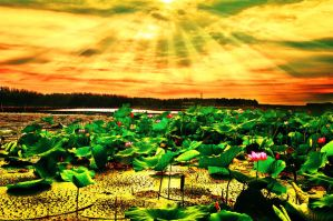 Sunrise the lotus pond by sunny2011bj