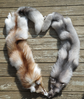 Opposites by TabbyFoxTaxidermy