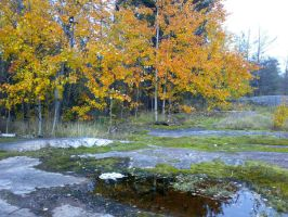 The Beauty of October by vonderwall