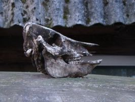 Old skull 3 by Panopticon-Stock