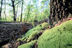 Moss-tree-hdr-color by joelht74