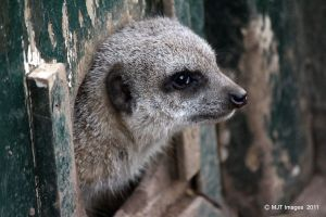 Meerkat Manor by MichaelJTopley