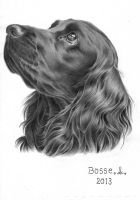 Cocker Spaniel by Torsk1