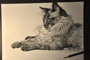 Sketch for a cat by banhatin