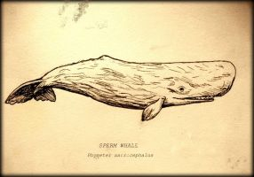 Sperm Whale Card by elicenia