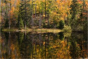 Autumn lake mirror by Aphantopus