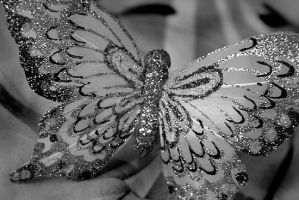 Feather's Butterfly by Edonist-Girl