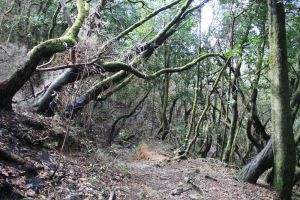 La Gomera forest 3 by Ieris-Stock