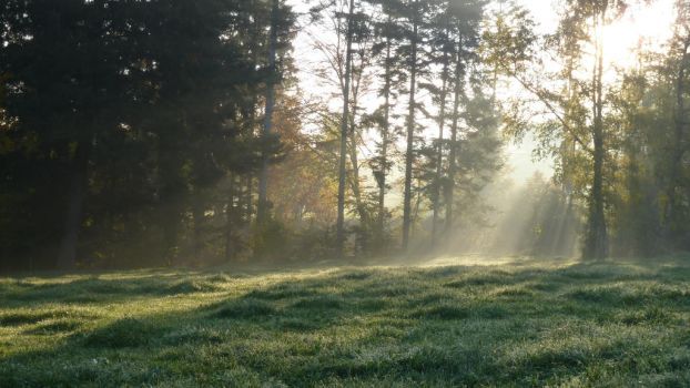 Enlighted Meadow 1 by SelvaStock