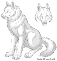 Free Wolf Ref Sheet by FerianMoon