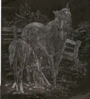 Horse Etching_For Michael by cheyennehorselove