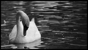 The ugly duckling by linoerh