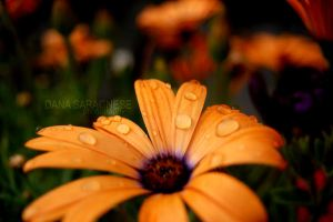 Just Watered II by alluring