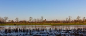 wetlands by clochartist-photo