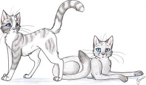 Ivypool and Dovewing by Cape-Cat
