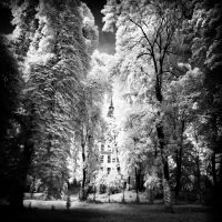Jewish Cemetery Berlin infrared by MichiLauke