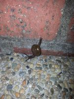 Snail 7Oct2014 by RiverKpocc