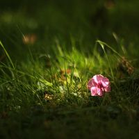 Flower in grass by MilanVopalensky