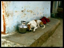 :India: Sieste canine by nebpixel